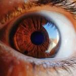 Successful Rebuilding of cornea by using stem cells